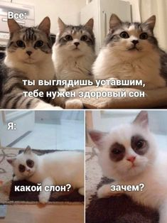 Russian Humor, Life Philosophy, My Mood, Haha, Laughter, Funny Quotes, Funny Pictures, Jokes, Animals