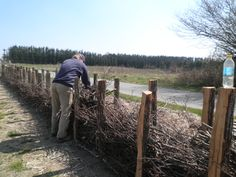 Making fence of branches from the trees we've cut down. All you need: a hole digger, trunks, branches and twigs. Natural and useful, you can add branches and twigs the years yet to come.
