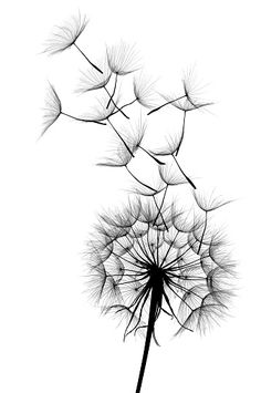 : Dandelion in the group Poster / sizes and formats / at Desenio AB - at - - Cadre Design, Mode Poster, Groups Poster, Poster Sizes, Quotes About Photography, Picture Wall, Scandinavian Design, Cross Stitch Patterns, Art Patterns