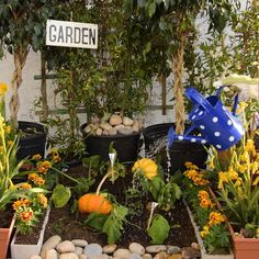 """Ex-seed all your replanting dreams with these 11 clever hacks! Ex-seed all your replanting dreams with these 11 clever hacks!,grow Replanting made easy! Related posts:How To Plant a """"Set and Forget"""" Edible Garden –."""