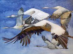 Kranich Bilder im Natureum Darßer Ort | Formationsflug (c) Ein Kranichaquarell von Frank Koebsch