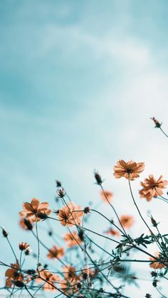 cool phone backgrounds - cool wallpapers for your phone - cool phone wallpapers Cute Patterns Wallpaper, Aesthetic Pastel Wallpaper, Aesthetic Backgrounds, Aesthetic Wallpapers, Flower Phone Wallpaper, Summer Wallpaper, Iphone Background Wallpaper, Iphone Backgrounds Nature, Vintage Flowers Wallpaper
