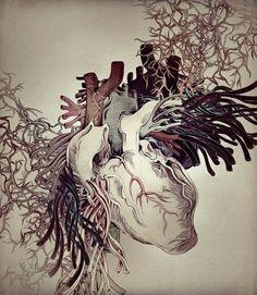 Illustration  heart  anatomy