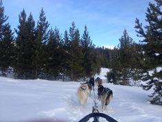 Dog Sledding, Big Sky, Montana