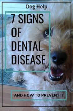 How to keep your dog's teeth clean? What to do if your dog won't let you brush his teeth? How to keep your dog's teeth clean? What to do if your dog won't let you brush his teeth? Dog Care Tips, Pet Care, Pet Tips, Mites On Dogs, Dog Health Tips, Pet Health, Health Care, Hypoallergenic Dog Food, Dog Teeth