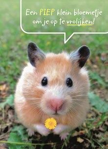 Happy Quotes, Funny Quotes, Animals And Pets, Cute Animals, Cute Hamsters, Message Quotes, Happy B Day, Friends Forever, Life Is Beautiful