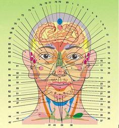 Что каждый может узнать о себе по лицу - проекционные зоны по Огулову