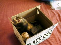 Little Black Bag: This might be a LBB first! You'll never guess which kind of pet Karina Mattingly put in her LBB box! #ferret