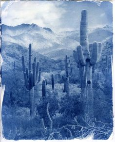 Saguaro Valley 1 - SteveMPhoto - Handmade cyanotype print on hot pressed watercolor paper. The print was made using a digital negative and contact printing process. The image was captured in the McDowell-Sonoran Land Trust area near Scottsdale, AZ. Sun Prints, Land Trust, Alternative Photography, Cyan Blue, Cyanotype, Agaves, Famous Photographers, Cacti, Watercolor Paper