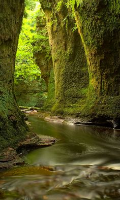 Finnich Glen near Loch Lomond in Scotland • Photo: Ann-Marie Westwood on Photorator