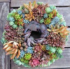 Succulent Wreath, Succulents Garden Design Calimesa, CA