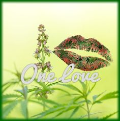 Weed Memes | Funny Marijuana Meme | Cannabis Meme One Love www.weedmemes.com #weedmemes #420 #meme #420meme #stonermeme #weedmeme #marijuana #marijuanamemes