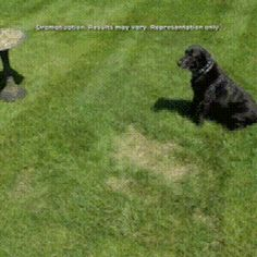 GrassGrow™ Biodegradable Grass Seed Protector Mat – Sunsdale Grass Seed Mat, Grass Rolls, Growing Grass, Back Garden Design, Garden Solutions, Home Landscaping, Green Lawn, Lawn And Garden, Lawn Care