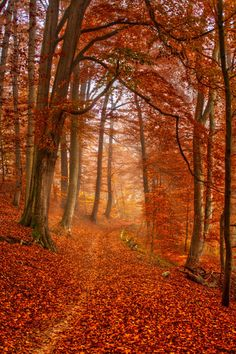 'Herbstwald' -- by Andres Glückert