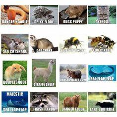 Alternative animal names