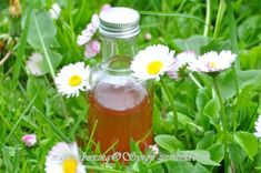 syrop ze stokrotek My Favorite Food, Favorite Recipes, Magic Recipe, Hot Sauce Bottles, Health And Beauty, Smoothies, Birthday Gifts, Remedies, Food And Drink