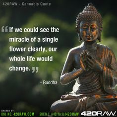 If we could see the miracle of a single flower clearly, our whole life would change. - Buddha -@official420raw / 420raw.com