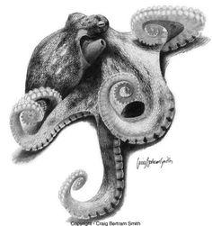 B/W realistic octopus sketch