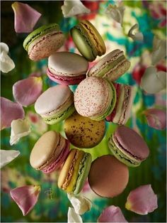 pierre-herme-macaron - the BEST macarons in Paris. I swear. We did a taste test of macaron shops and THIS IS IT! Amazingly fresh, delicious and they packaging keeps them fresher, longer as well. Sorry, Laduree, but you have been out-macaroned. French Macaroons, Cupcakes, Saveur, Great Recipes, Sweet Tooth, Food Photography, Sweet Treats, Food And Drink, Sweets