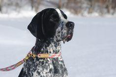 collier et laisse pour chien en corde  et accessoire marin/  lavieaulac.ca