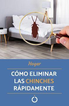 Como Acabar Con Las Chinches En Casa Pin En Bichos