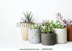 Succulents and cactus in different concrete pots on the white shelf. Scandinavian hipster home decoration