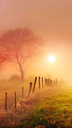 Sunrise, morning mist, misty, fence, tree, sunbeams, sun, field, beauty of Nature, photo
