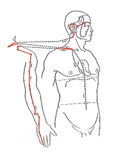 Triple Warmer Meridian Flow - Triple meridian path, acu pressure points and imbalances. Everything you need to know to identify issues and heal this part of yourself #Triple #Meridian #Healing #Bsync http://www.natural-health-zone.com/triple-warmer-meridian.html