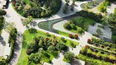 Jiang Wan Cheng | Landscape Architecture | Cicada
