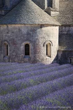 Lavender leading to Abbaye de Senanque near Gordes, Provence France. © Brian Jannsen Photography