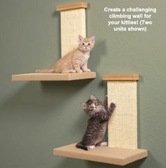 I like the idea but I don't think these would be big enough for my cat.
