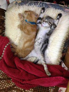 Kitty cat surrender...