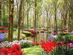 (en) Colourful garden || (pt) Jardim colorido