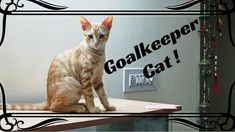 Pixie, The Goalkeeper Cat!  With their jumping skills and flexible bodies, cats are no doubt more athletic than humans.  Watch in this video Pixie guarding his box, demonstrating amazing goalkeeping abilities and his determination to kick the ball out of the box no matter what, even when he misses saving the goal!