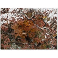 Trademark Fine Art Early Snow Fall Canvas Art by Kurt Shaffer, Size: 35 x 47, Multicolor