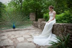 Mayfield Park in Austin, another place with free roaming peacocks