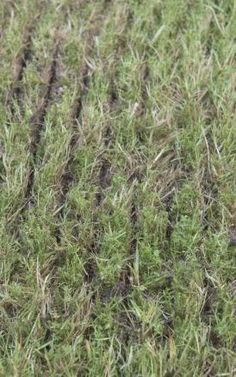 Rasen nach dem Vertikutieren