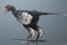 scinexx | Neuer Fossilfund rehabilitiert den Archaeopteryx: In China entdeckter Urvogel wirbelt den Vogel-Stammbaum erneut durcheinander - Archaeopteryx, gefiederte Dinosaurier, Urvogel - Archaeopteryx, gefiederte Dinosaurier, Urvogel, Aurornis xui, Vogel-Stammbaum, Evolution, Paläontologie, Fossil, Liaoning, Deinonychosaurier