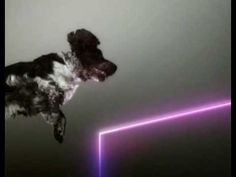 Fat techno beat + long haired dogs + a trampoline = GENIUS.