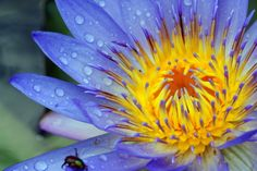 Beautiful Macro Photography Shots Gallery