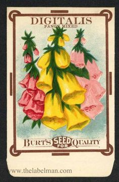 DIGITALIS, Fancy Mixed, Antique Seed Packet