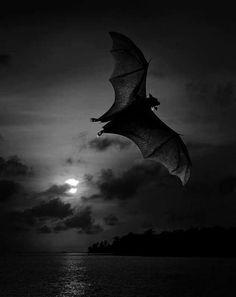 Image result for bat night
