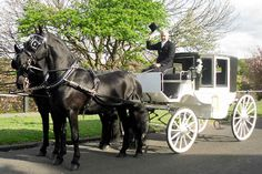 Arrive in style - Black Friesians & Ivory carriage
