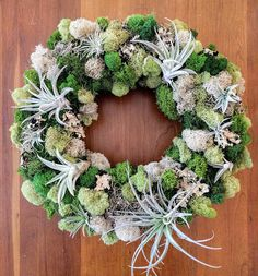 Living Air Plant Wreath with Multiple Air Plants Reindeer