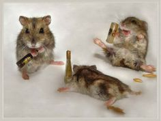 #NTB: Yup ➡ Mice can get drunk all right!