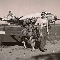 Man Donkey and Airplane Vintage Snapshot Photo by BallyDingRevue, $25.00