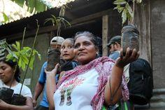 Nicaraguan coffee farmer Juana Villaregna carries coffee saplings to the field, Jan 2013.     http://www.highergroundstrading.com/26/nicaragua#