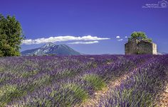 Valensole © Simon Durand - Flickr Creative Commons