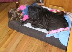 Ayla taking a nap with Jazzy on her big bed.