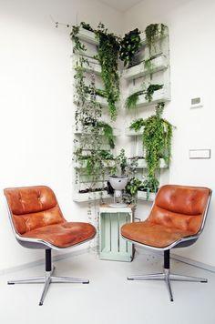 Afbeeldingsresultaat voor hangplant in huis